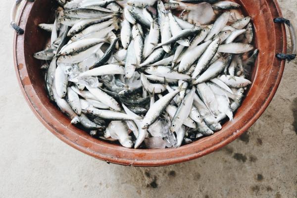 鱼肉中潜藏的健康问题